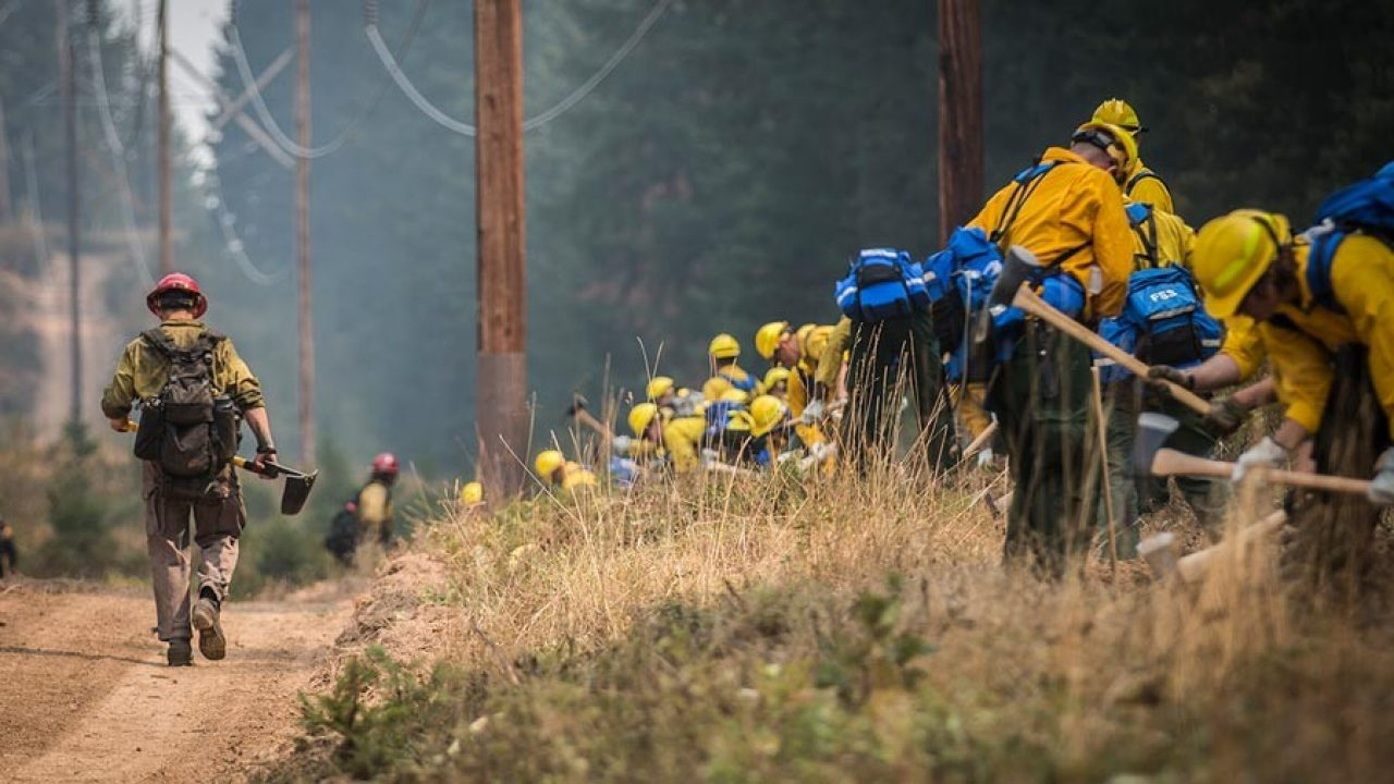Firefighters on the scene of a forest wildfire