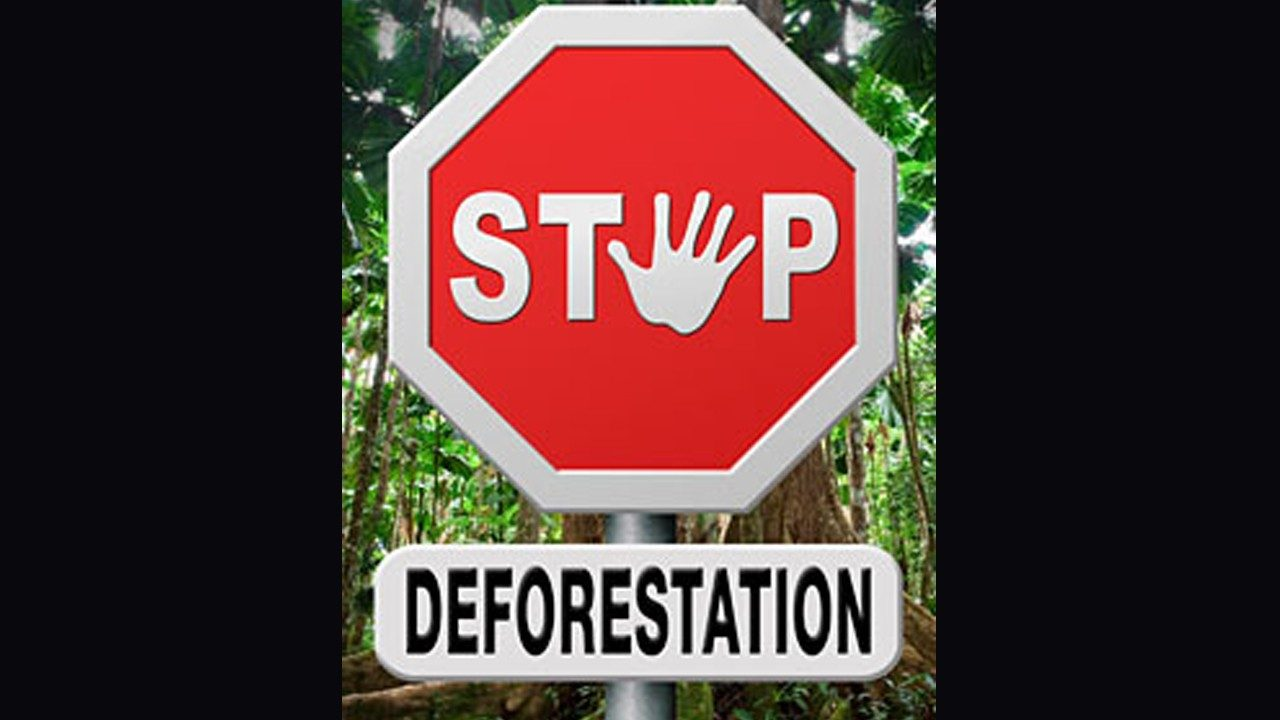 A \x26#34;stop deforestation\x26#34; sign